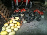 Stockage temporaire courges