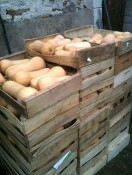Stockage courges butternut