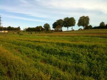 Angélique & Denis des champs verts