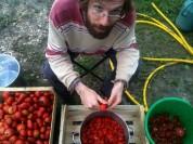 Samuel - découpe des tomates