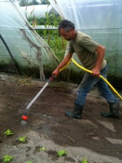 Joseph - arrosage radis