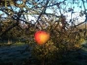 La Ronde des Fruits