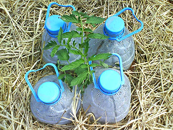 Arrosage goutte a goutte bouteille photos de conception for Goutte a goutte maison