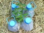 irrigation_goutte_a_goutte_solaire