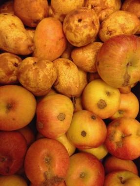 Fruta Feia_02