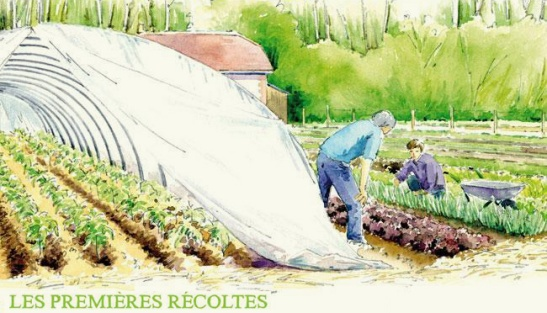 micro ferme - microferme - micro-ferme - premières récoltes