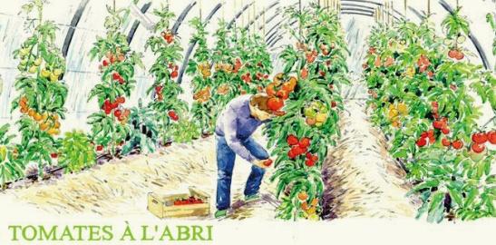 micro ferme - microferme - micro-ferme - tomates sous serres