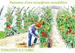 microferme maraîchère Bourdaisière - tomates sous serres