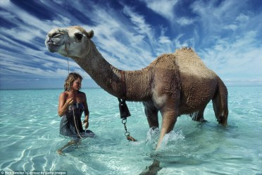 Robyn Davidson with Bub: Of all the camels Bub was the one who seemed to be the most delighted by the water even though he couldn't drink it. He treated water as if it were a new found toy, splashing around like a toddler. If Robyn was in the water Bub had to be there too